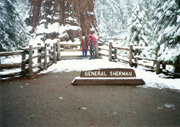 General Sherman Tree, Sequoia National Park (largest tree in the world), Carl, Mom Jeanette