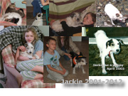 In Rememberance of Jackie the Jack Russel Terrier